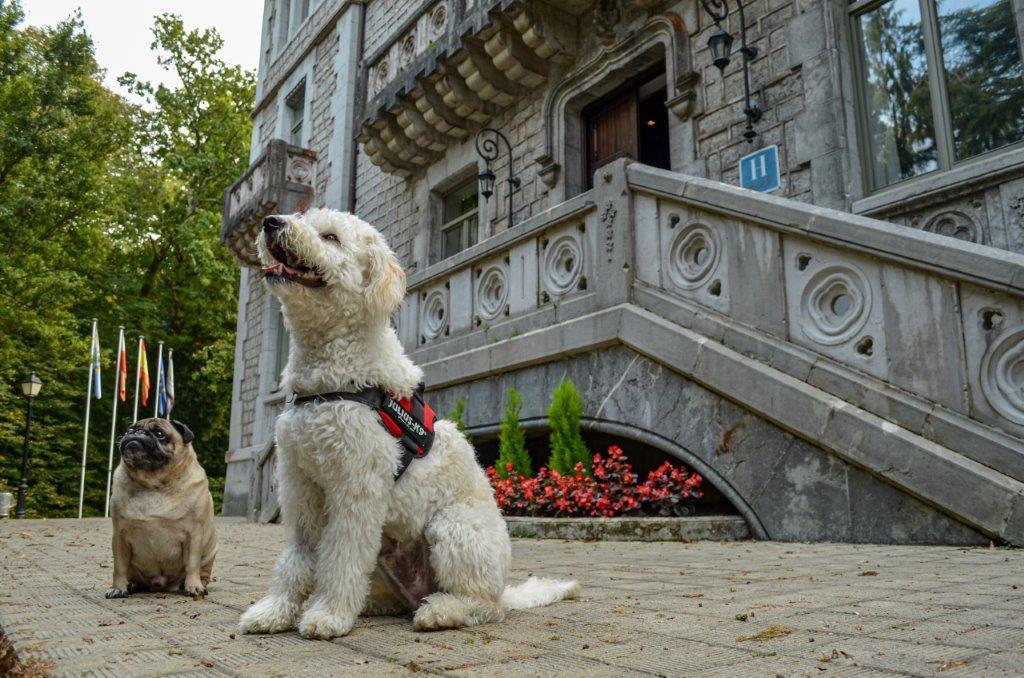 Paradores amplía a 31 los establecimientos en los que admite mascotas, a las que recibirá con un kit de Royal Canin