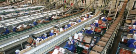 CSIF reitera la necesidad de extremar las medidas de protección a los trabajadores y trabajadoras del manipulado