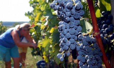 El delegado del Gobierno informa del reparto de 4,5 millones de euros para el sector vitivinícola y de flor cortada de la Región de Murcia