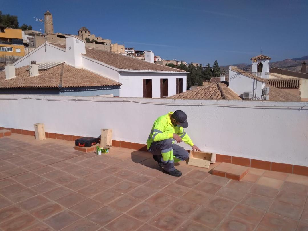 El Ayuntamiento de Lorca instala 25 casas nido en diversos edificios municipales para facilitar la cría del vencejo y seguir apostando por el cuidado y el conocimiento de las aves