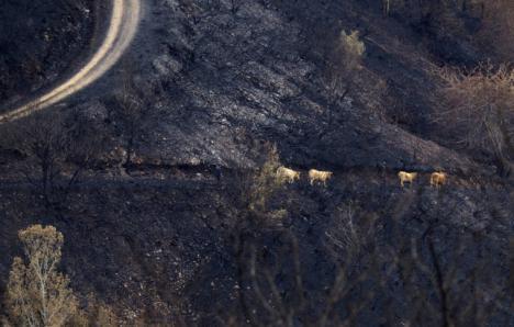 A Prisión el detenido en Porqueira presunto culpable de siete incendios