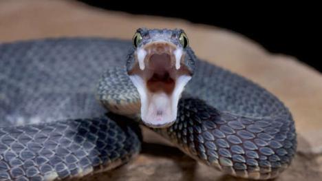 Muere tras ser mordida por una serpiente que compró por Internet
