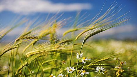 Que agradable seria si al exhalar nuestro último aliento. Ese aire expulsado arrastrara nuestra alma convertida en viento. Un viento que se llevará parte de nuestro ser, para viajar por el aire y el tiempo