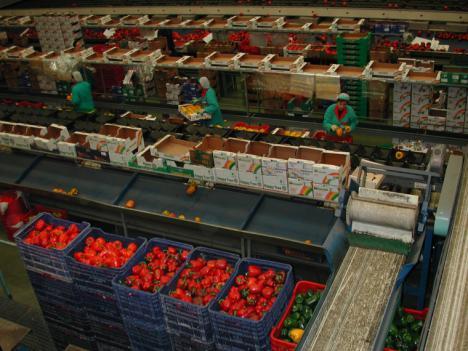 El PSRM muestra su apoyo a los miles de trabajadores del sector agroalimentario que se manifiestan hoy contra las condiciones laborales